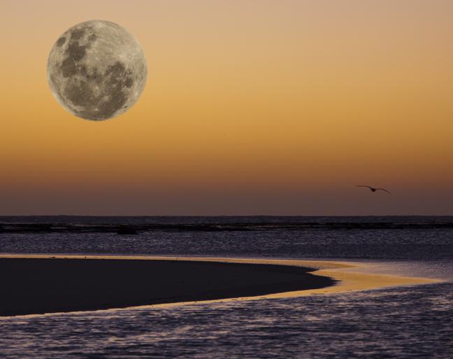 Fake Moon